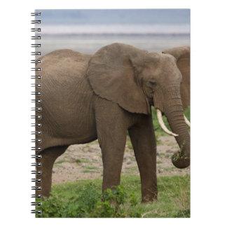Africa. Tanzania. Elephant at Lake Manyara NP. Notebooks
