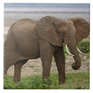 Africa. Tanzania. Elephant at Lake Manyara NP. Tile