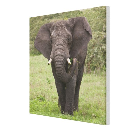 Africa. Tanzania. Elephant at Ngorongoro Crater, Gallery Wrap Canvas