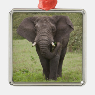 Africa. Tanzania. Elephant at Ngorongoro Crater, Christmas Ornament