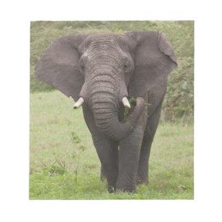 Africa. Tanzania. Elephant at Ngorongoro Crater, Notepad