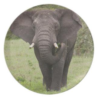 Africa. Tanzania. Elephant at Ngorongoro Crater, Plate