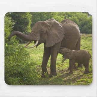 Africa. Tanzania. Elephant mother and calf at 2 Mouse Mat