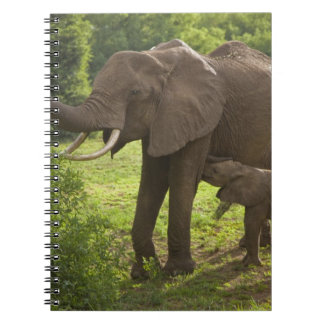Africa. Tanzania. Elephant mother and calf at 2 Notebooks