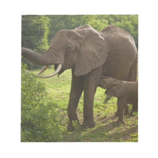 Africa. Tanzania. Elephant mother and calf at 2 Notepad