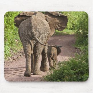 Africa. Tanzania. Elephant mother and calf at Mouse Mat