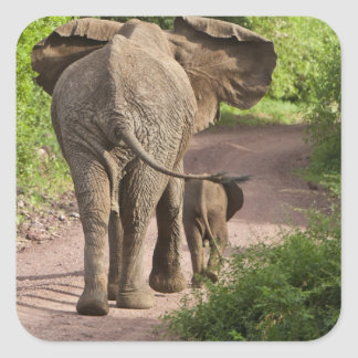 Africa. Tanzania. Elephant mother and calf at Square Sticker