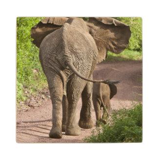 Africa. Tanzania. Elephant mother and calf at Wood Coaster