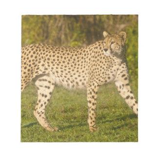 Africa. Tanzania. Female Cheetah at Ndutu in the 2 Notepad
