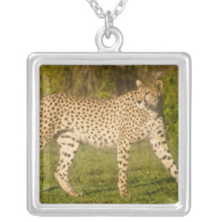 Africa. Tanzania. Female Cheetah at Ndutu in the 2 Silver Plated Necklace