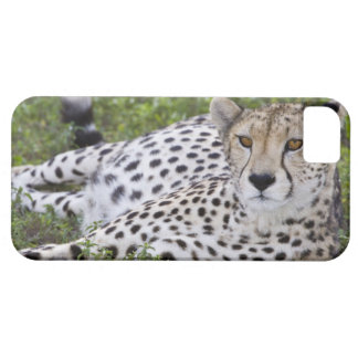 Africa. Tanzania. Female Cheetah at Ndutu in the iPhone 5 Covers
