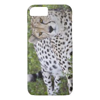Africa. Tanzania. Female Cheetah at Ndutu in the iPhone 7 Case