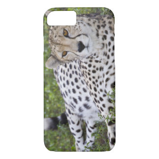 Africa. Tanzania. Female Cheetah at Ndutu in the iPhone 8/7 Case