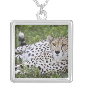 Africa. Tanzania. Female Cheetah at Ndutu in the Silver Plated Necklace