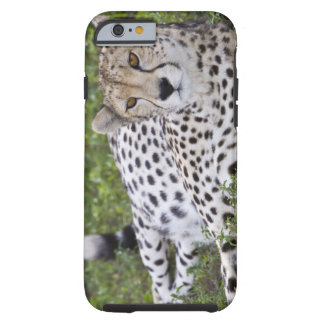 Africa. Tanzania. Female Cheetah at Ndutu in the Tough iPhone 6 Case