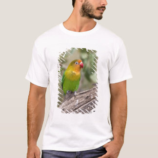 Africa. Tanzania. Fischer's Lovebird at Ndutu in T-Shirt