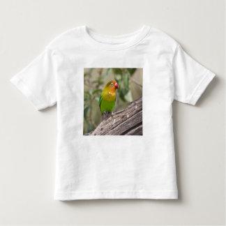 Africa. Tanzania. Fischer's Lovebird at Ndutu in Toddler T-Shirt