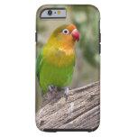 Africa. Tanzania. Fischer's Lovebird at Ndutu in Tough iPhone 6 Case