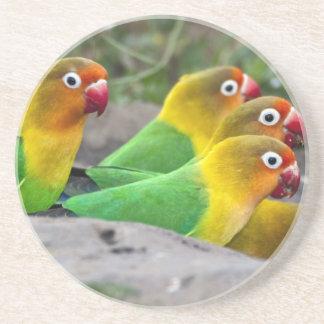 Africa. Tanzania. Fischer's Lovebirds drinking Coaster