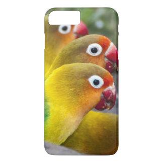 Africa. Tanzania. Fischer's Lovebirds drinking iPhone 8 Plus/7 Plus Case