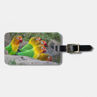 Africa. Tanzania. Fischer's Lovebirds drinking Luggage Tag