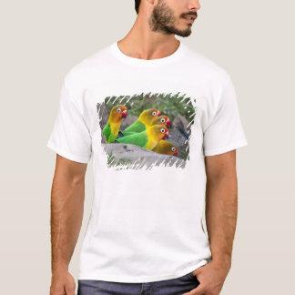 Africa. Tanzania. Fischer's Lovebirds drinking T-Shirt