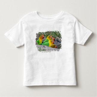 Africa. Tanzania. Fischer's Lovebirds drinking Toddler T-Shirt
