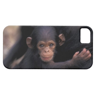 Africa, Tanzania, Gombe Nat'l Park,  Flirt, a iPhone 5 Covers