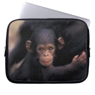 Africa, Tanzania, Gombe Nat'l Park,  Flirt, a Laptop Sleeve