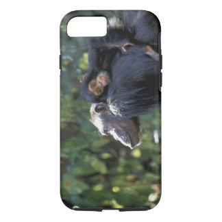 AFRICA, Tanzania, Gombe NP, Chimpanzees.  Female iPhone 8/7 Case