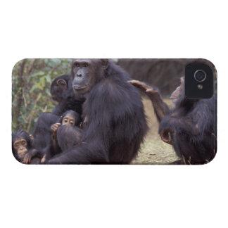 Africa, Tanzania, Gombe NP Infant female Case-Mate iPhone 4 Case
