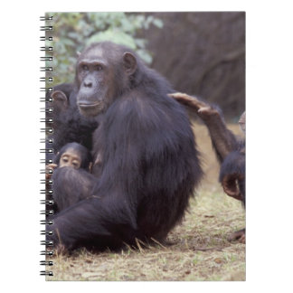 Africa, Tanzania, Gombe NP Infant female Notebook