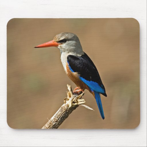 Africa, Tanzania, Grey-headed Kingfisher Mouse Pads