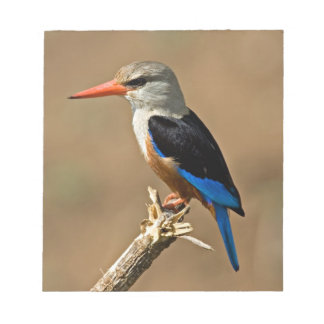Africa, Tanzania, Grey-headed Kingfisher Notepad