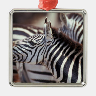 Africa,Tanzania,herd of zebras Christmas Ornament