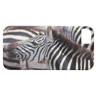 Africa,Tanzania,herd of zebras iPhone 5 Case