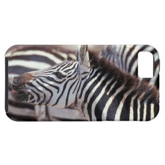Africa,Tanzania,herd of zebras iPhone 5 Cover