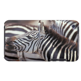 Africa,Tanzania,herd of zebras iPod Touch Covers