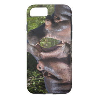 Africa. Tanzania. Hippopotamus sparring at the iPhone 8/7 Case
