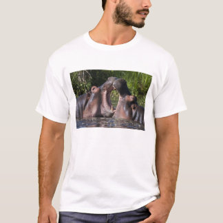 Africa. Tanzania. Hippopotamus sparring at the T-Shirt