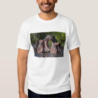 Africa. Tanzania. Hippopotamus sparring at the T Shirts