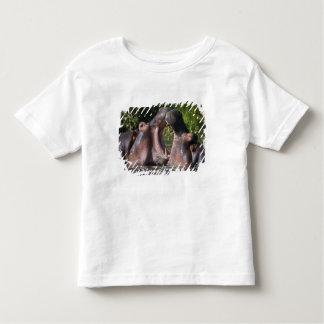 Africa. Tanzania. Hippopotamus sparring at the Tee Shirt