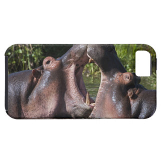 Africa. Tanzania. Hippopotamus sparring at the Tough iPhone 5 Case