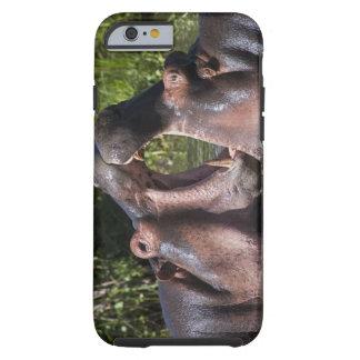 Africa. Tanzania. Hippopotamus sparring at the Tough iPhone 6 Case