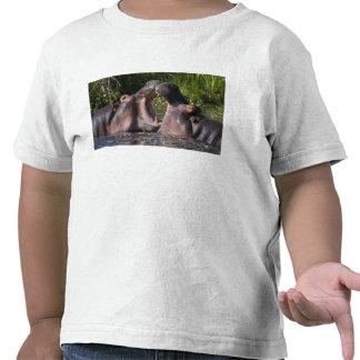 Africa. Tanzania. Hippopotamus sparring at the Tshirt