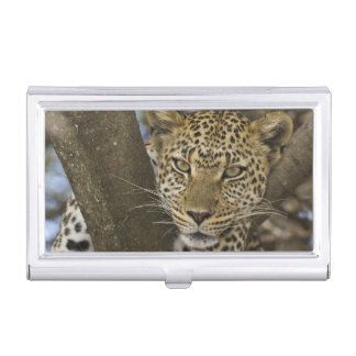 Africa. Tanzania. Leopard in tree at Serengeti Business Card Holder