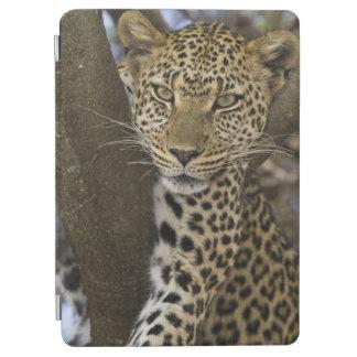 Africa. Tanzania. Leopard in tree at Serengeti iPad Air Cover