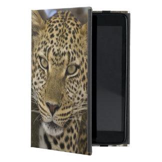 Africa. Tanzania. Leopard in tree at Serengeti iPad Mini Case