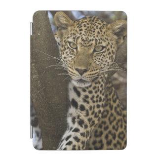 Africa. Tanzania. Leopard in tree at Serengeti iPad Mini Cover