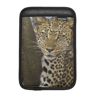 Africa. Tanzania. Leopard in tree at Serengeti iPad Mini Sleeve